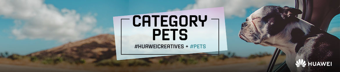 Huawei creatives categories connector 18 02 19 gm pets